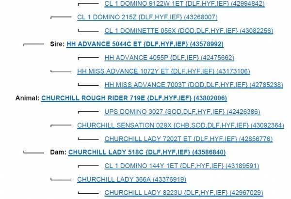 CHURCHILL ROUGH RIDER 719E {DLF,HYF,IEF} • ORIgen Semen