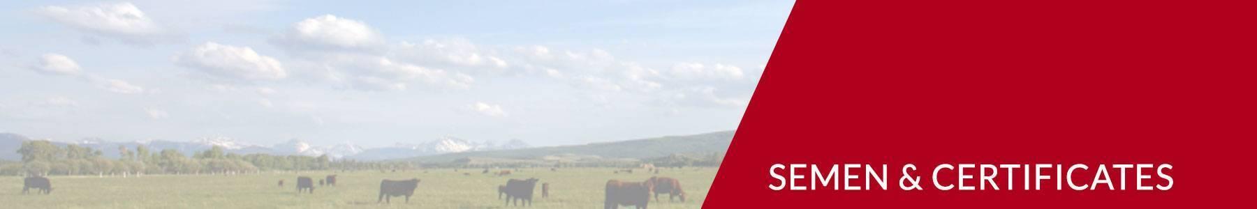 Buy Club Calf Semen | ORIgen